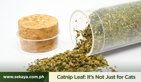 Catnip Leaf: It's Not Just for Felines
