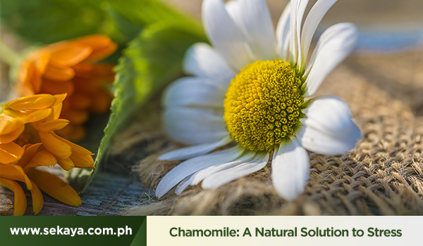 Chamomile: A Natural Solution to Stress