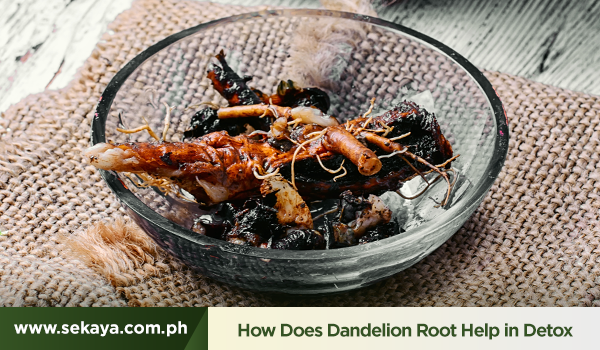 Dandelion Root: How Does it Help in Detoxing?