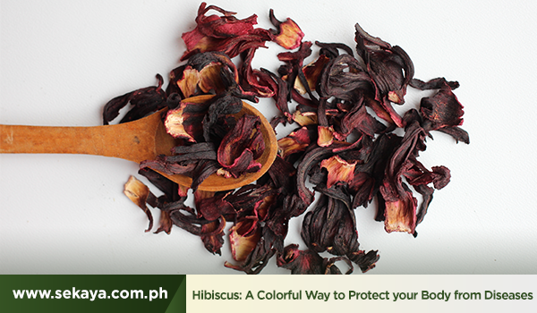 Hibiscus: A Colorful Way to Protect your Body from Diseases
