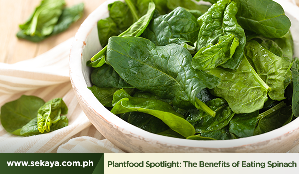 Plantfood Spotlight: The Benefits of Eating Spinach