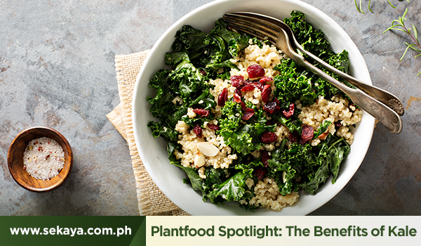 Plantfood Spotlight: The Benefits of Kale