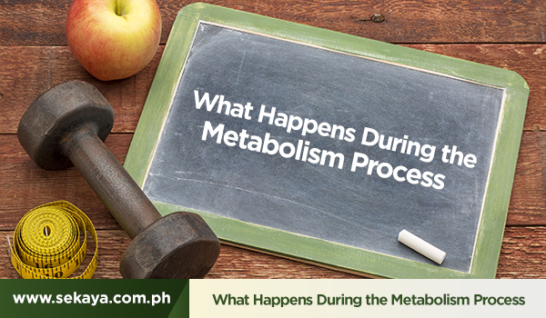 What Happens During the Metabolism Process